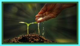 wateringplant2