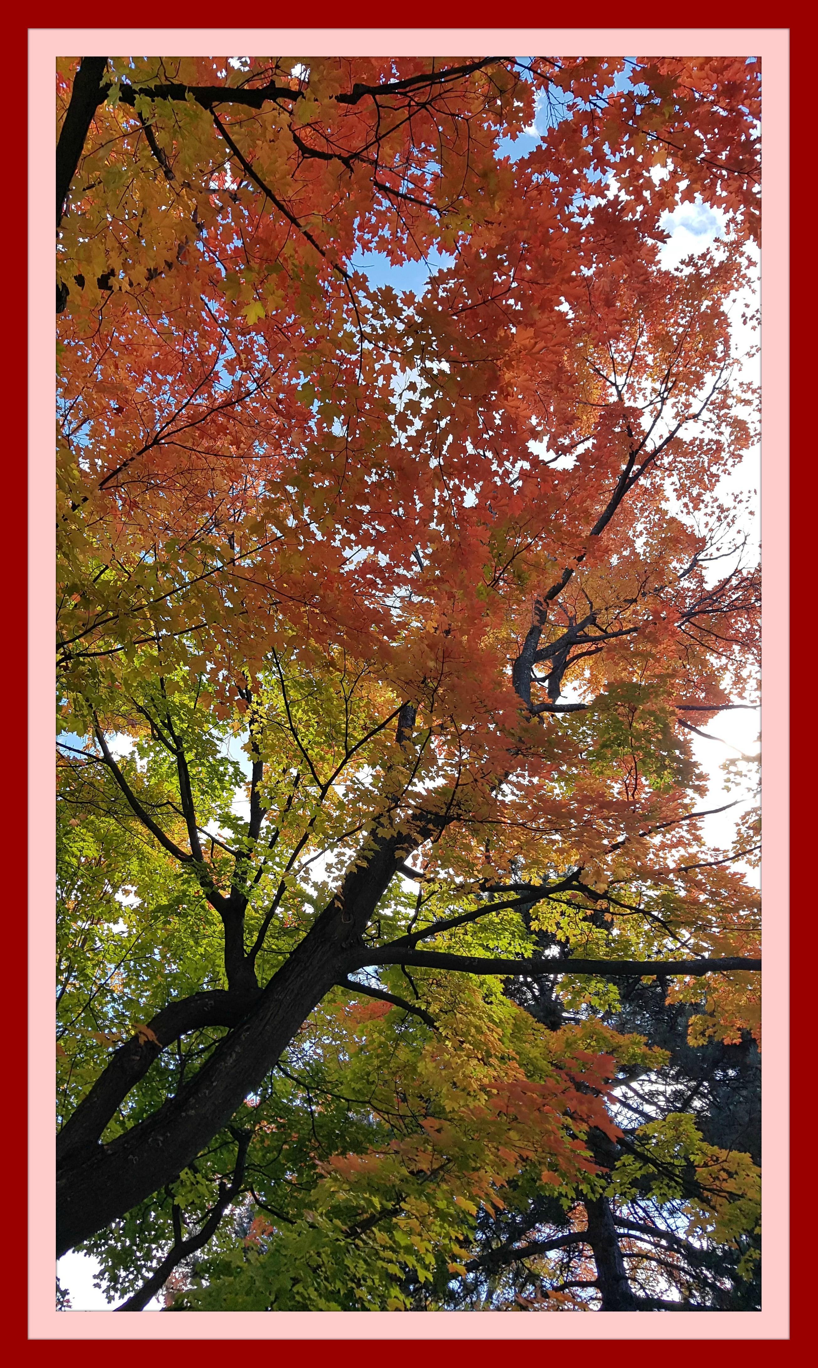 Tree 1AB